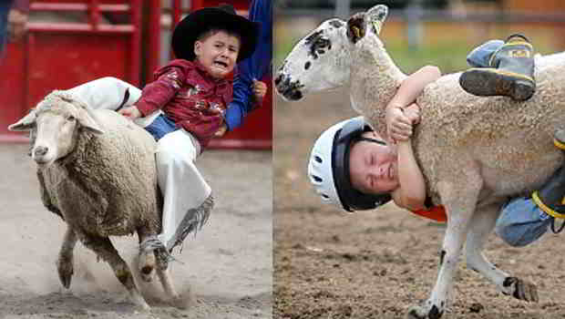 New York City Bans Mutton Busting