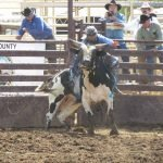 Profesional Rodeo Bull Riding